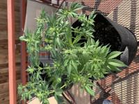 First indoor grow