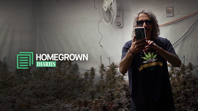 How to grow marijuana – beginner's guide